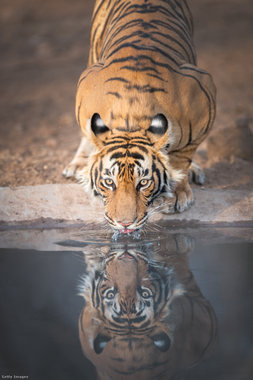 tigris iszik