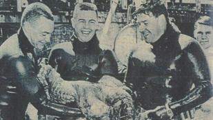 Amerikában évekig népszerű sport volt a polipbirkózás
