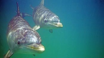 Úgy néz ki, nem lesznek delfinek Budapesten
