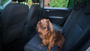 Így utaztasd a kutyádat biztonságosan az autóban