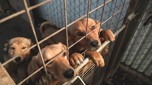 Ilyen a kutyaélet az ország egyik legszegényebb menhelyén