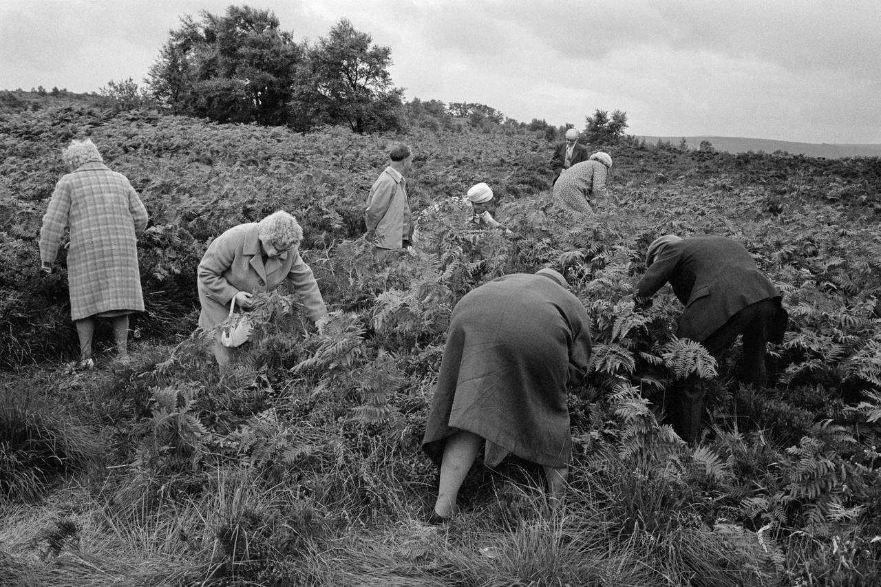 York megye, Észak-Anglia. 1974.