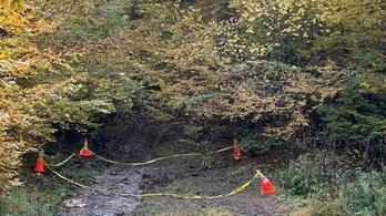 Már a második román erdészt ölték meg rövid időn belül a fatolvajok