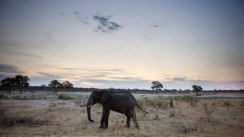 55 elefánt pusztult el két hónap alatt az aszály miatt