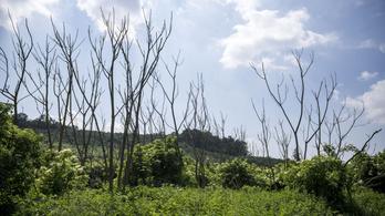 Ökológiai szempontból ijesztő jövő várhat Magyarországra 2050-re