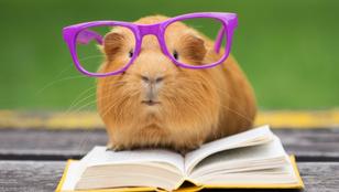 Milyen állat hiányzik a könyv címéből? – Kvíz!