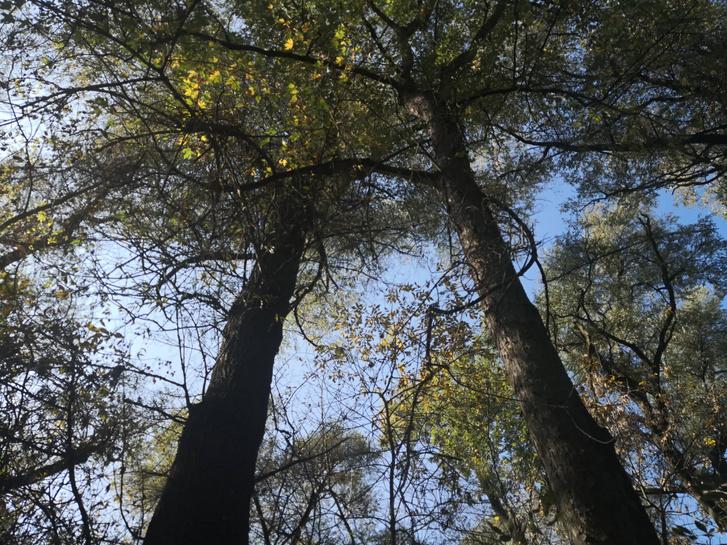 Ezek a hatalmas fák is belógnak