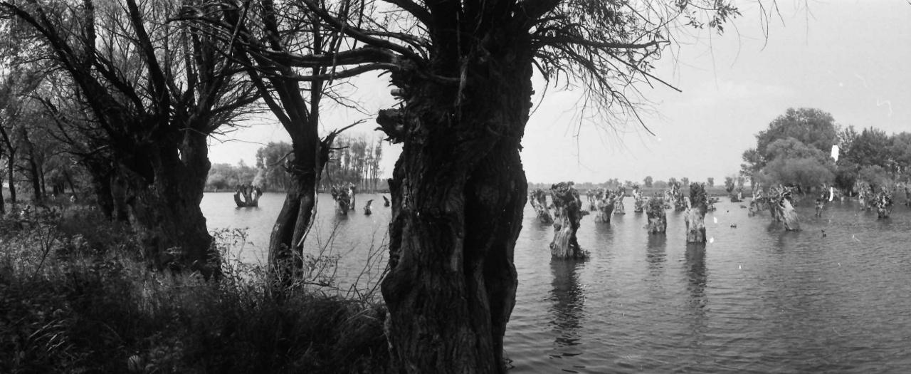Talán a Tiszánál. A Visszaesők című film forgatásához készült helyszínfotó,1983.A görög sorstragédiákat idéző történetben a frissen megözvegyült fiatal nő és a faluba költöző férfi egymásba szeret, de hamarosan kiderül, hogy féltestvérek. Őrület, halál, közös gyerekek és börtönbüntetés kíséri a tiltott, de vállalt viszonyt.