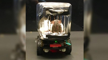 Megtanultak pici autókat vezetni a patkányok, és ettől nyugisabbak lettek