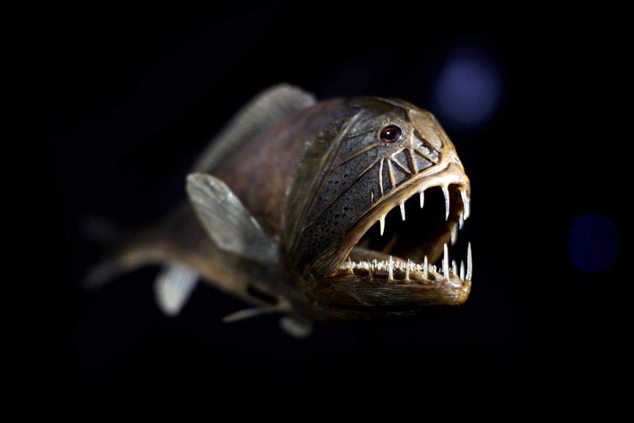 mélytengeri élőlény