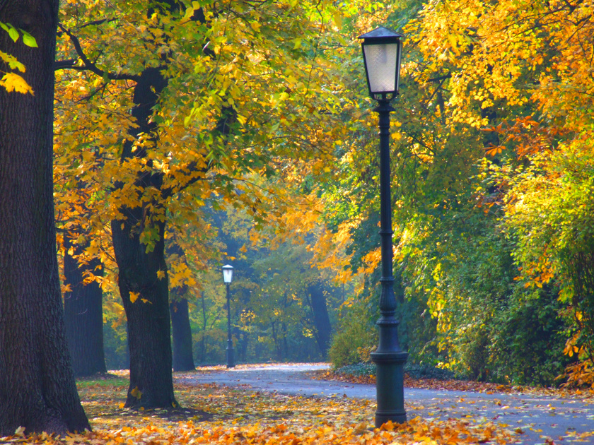 A martonvásári Brunszvik-kastélyt az teszi igazán különlegessé, hogy még maga Beethoven is zongorázott benne. Kastélyparkjának sétányán, hulló falevelek alatt végigmenni ősszel óriási élmény.
