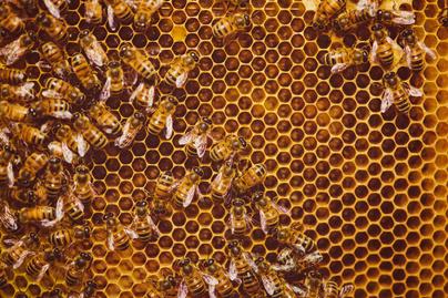 méhek ajánlókép