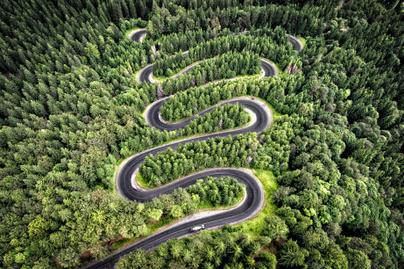 transzfogarasi-út-1-erdő