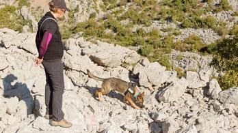Kutyák nyithatnak új fejezetet a régészetben