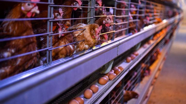 Káros tévhitek alapján vásárolunk tojást