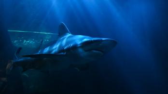 Cápa harapta le egy brit turista lábát Ausztráliában