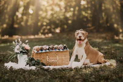 boldog kutyamama