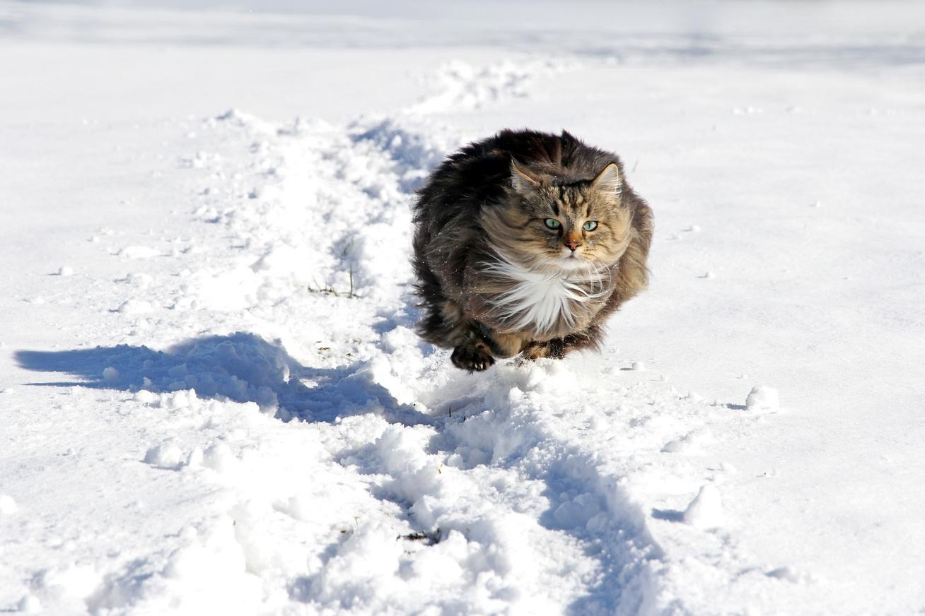 macska-hoban