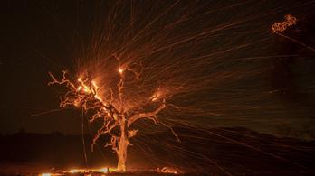 Vörös riasztást adtak ki a tűzvész miatt Kaliforniában