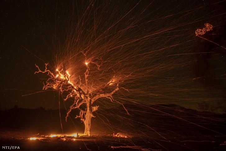 Lángoló tölgyfa parazsát hordja a szél az észak-kaliforniai Sonoma megyében Windsor közelében 2019. október 29-én.