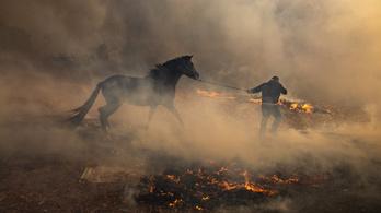 Nem csillapodik a tűzvész Kaliforniában