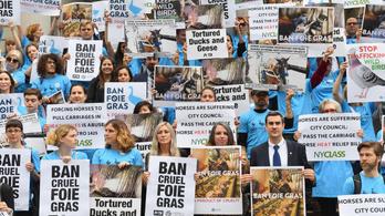 Betiltották a hízott libamájat New Yorkban