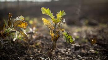 100 tonna makkból növeszt fát az Agrárminisztérium