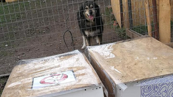 Választási falapok DIY: kutyaházakat készítenek a Kétfarkúak