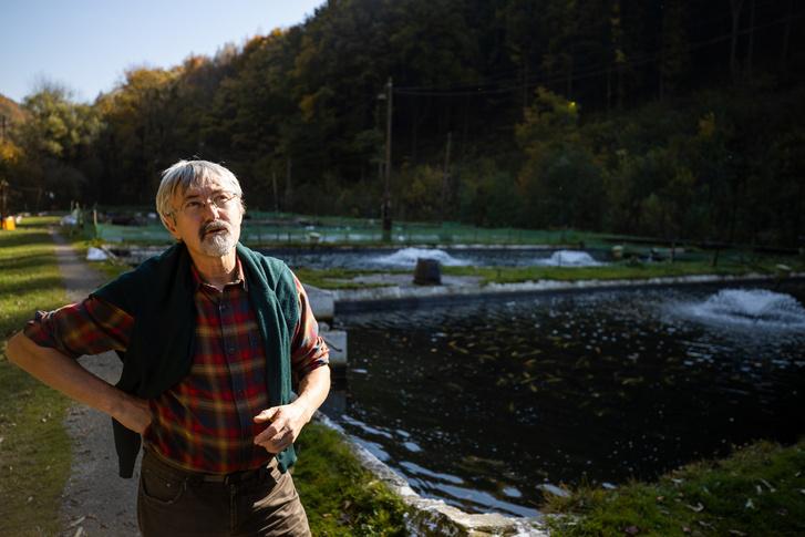 Hoitsy György 37 éve dolgozik halbiológusként a pisztrángtelepen