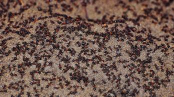 Kannibállá vált hangyákat találtak egy lengyel atombunkerben