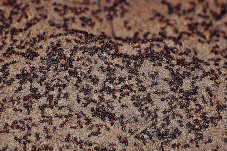 On-the-earth-mound-in-the-bunker-the-density-of-ants-was-high-on