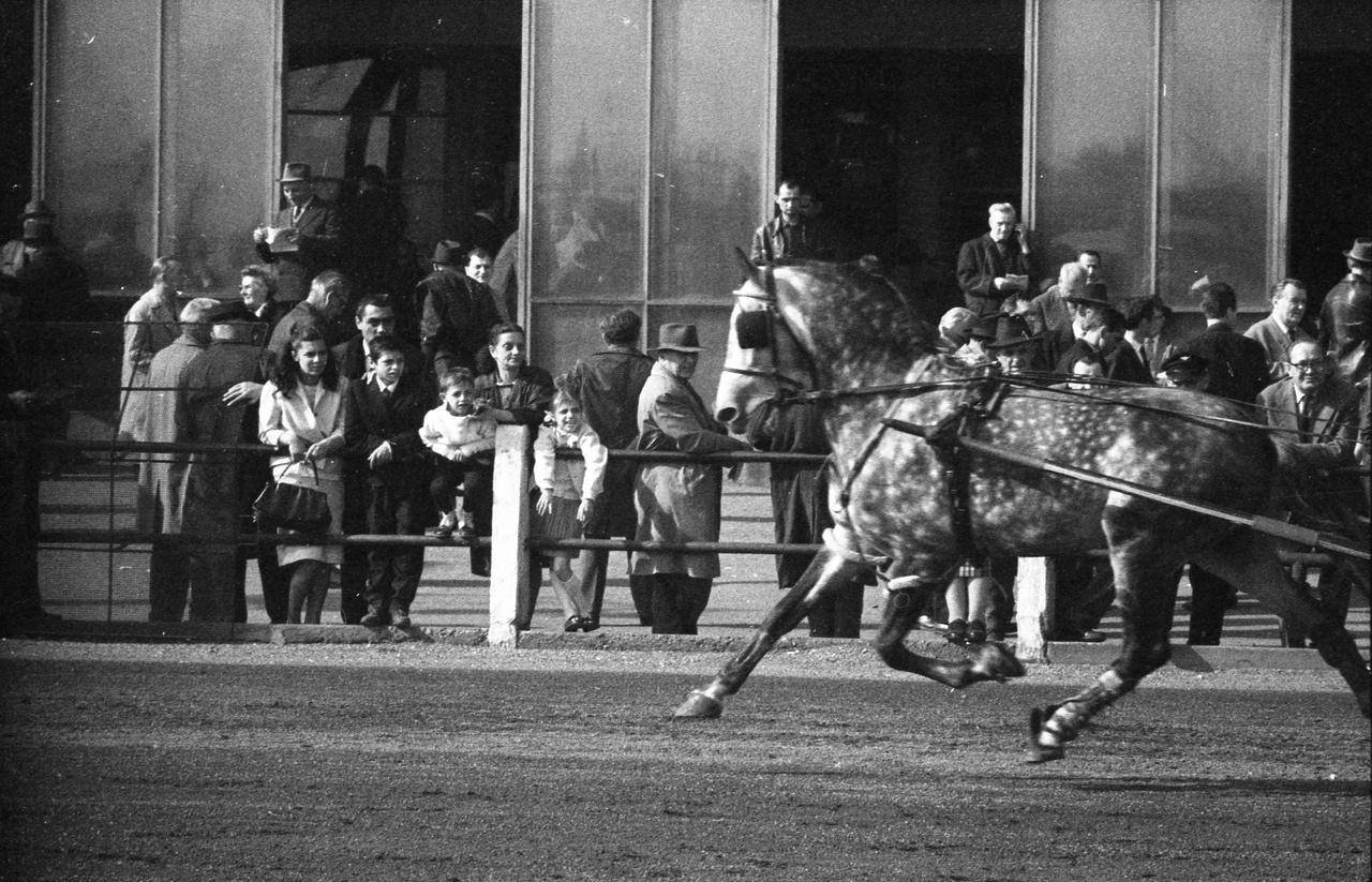 1966-ban is zajlott az élet az ügetőn. A Kerepesi úti ügetőpálya 1933-ban adott először otthont a derbynek, majd több mint 70 év után, 2004-ben, bezárta kapuit.