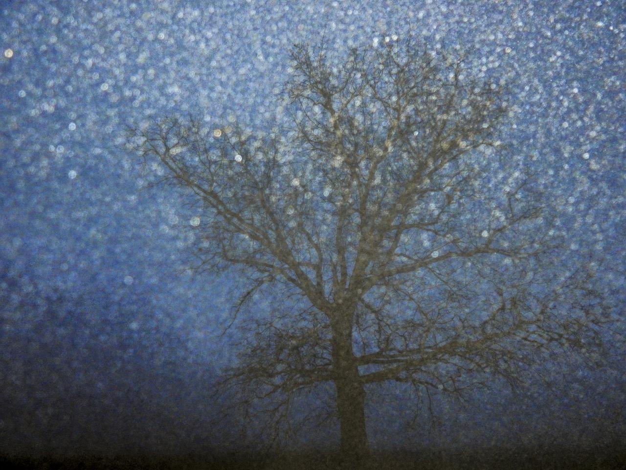 Ifjúsági kategória - 1. díj - Koncz-Bisztricz Tamás: Köd - Egy késő délután Ópusztaszerre látogattunk, dámszarvasfotózás reményében. Az erdőre hirtelenjében átláthatatlan köd és sötétség szállt. Kimentünk az erdő melletti mezőre, ahol van egy öreg tölgy. A fényképet a gép beépített vakujával készítettem. A karikák a vaku fénye által kirajzolt ködcseppek.