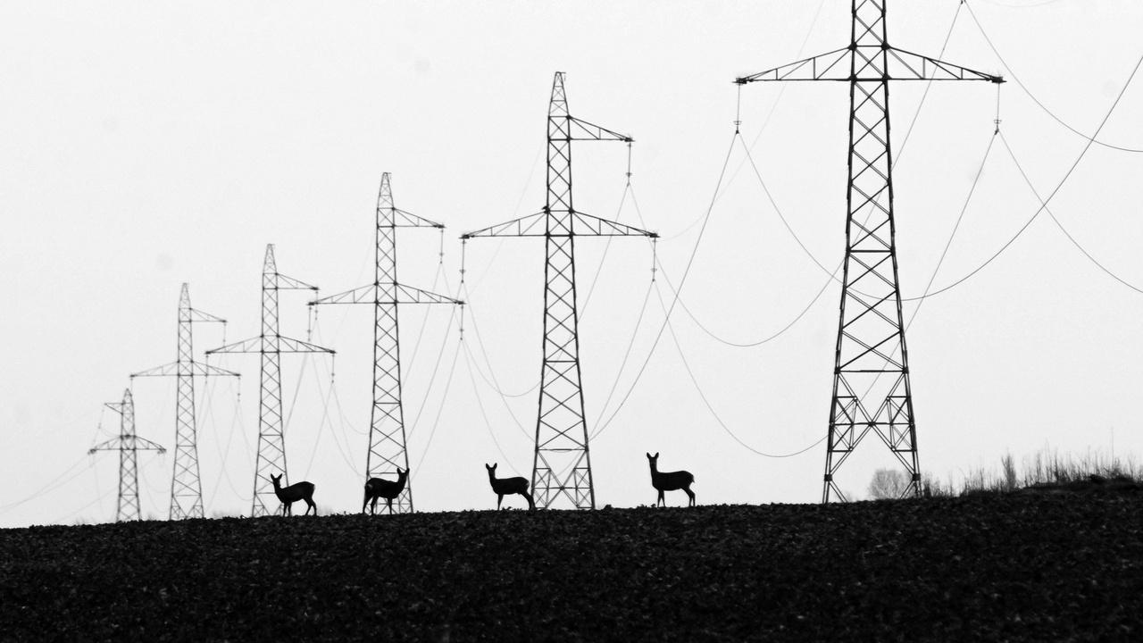 A fenntartható energiatermelés és a természet kapcsolata - 1. díj - Lakatos János: Felvillanyozva - Csongrád melletti elhúzódó magasfeszültségű áramvezeték alatt legelészett ez a pár őz. Első ránézésre nem volt valami nagyon érdekes, de mivel sétáltam tovább, egyre jobbnak tűntek az arányok.