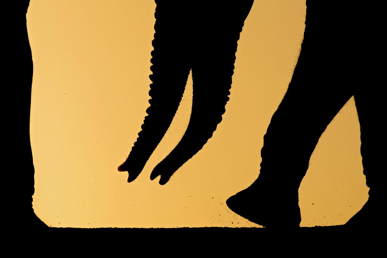 Kompozíció, forma és kísérletezés - Dícséretre méltó - Máté Bence: Ormányok - Elefántormányok és lábak kompozíciója a naplementében. Több héten át tartó utánajárással, kísérletezéssel és érdekes kompozíciók keresésével készült ez a felvétel. Korábban távolabbról készítettem a fotókat, amelyeken az állatok teljes egésze látszott, de később arra gondoltam, hogy teszek pár kísérletet, és csemegézek a különböző testrészeik és az egyedi fényviszonyok által kreált kompozíciókból is.