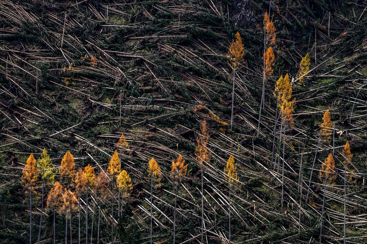 Kezünkben a Föld - 2. díj - Dr. Simán László: Tornádó a Dolomitokban - Az utóbbi években egyre gyakoribbá váltak a szokatlan katasztrófahelyzetek. Két éve ősszel az olasz Dolomitok lombhullató fenyveseit tarolta le széles sávban egy vihar, óriási anyagi kárt okozva. A helyszínre érkezve elnémult az addig vidám fotós csapatunk.