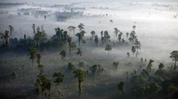 Túlbecsültük az erdőirtás hatását a klímaváltozásra