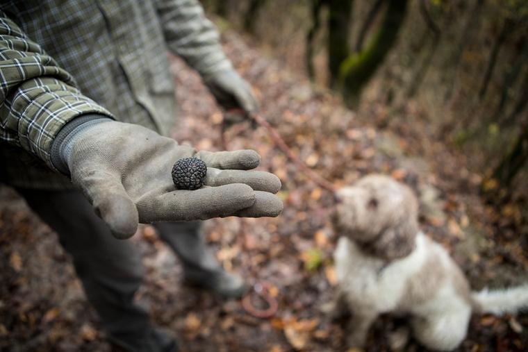 A nagyon energikus, társaságkedvelő kutyustól alapvetően nem kell félteni a gombákat, de ezeket a kisebbeket valamiért Vacak is kifejezetten kedveli