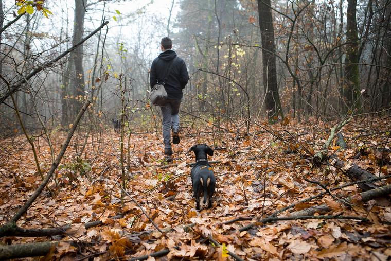 A szarvasgomba-kereső kutyák oktatásában két iskola van