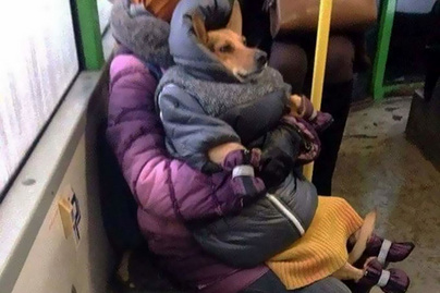 vicces-kutya