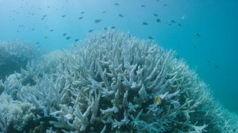 Műanyagtilalommal védenék a Nagy-korallzátonyt Ausztráliában