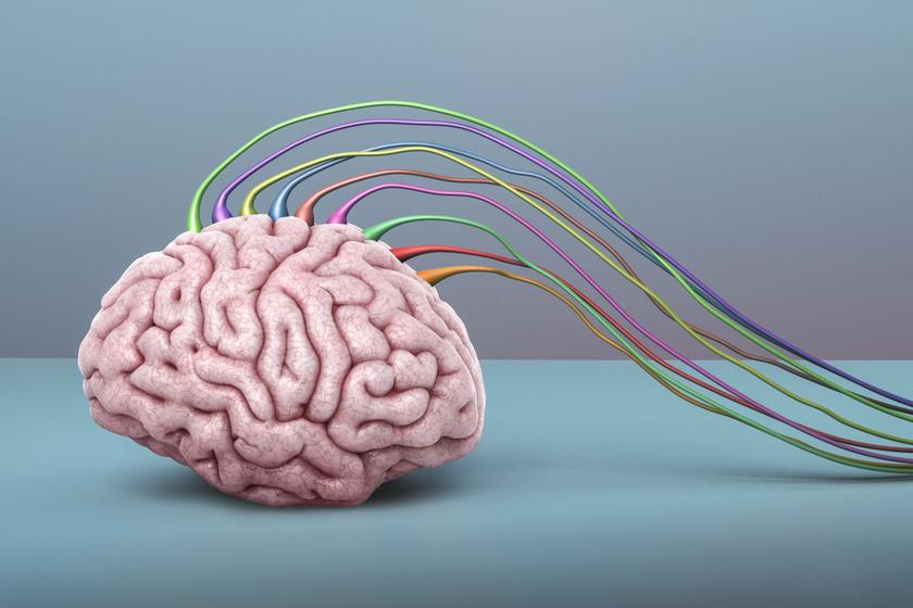 agyműködés fokozása