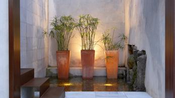 A szobanövények valójában nem javítják a benti levegő minőségét