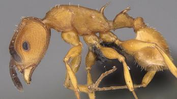 A hangyák csak a szuperorganizmus sejtjei
