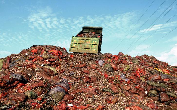 Teherautóval hordják a tönkrement hagymát a közép-indiai Madhja Prades állambeli Bopál város közelében levõ lerakóhelyre 2017. július 31-én. Túltermelés miatt több tonna felhasználatlan hagyma romlott meg a térségben