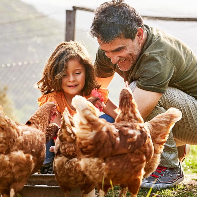 Fogadj örökbe egy tyúkot, legyen mindig házi tojásod: szuper kezdeményezés