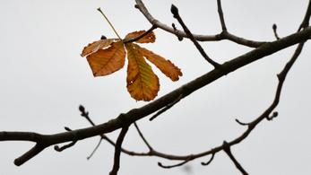 Csak keleten van száraz november