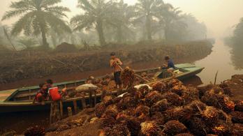Indonéziában megöltek két pálmaolaj-ellenes aktivistát