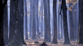 Megvannak az ország természetközeli területei, térképre tették a magyar ökoszisztémákat