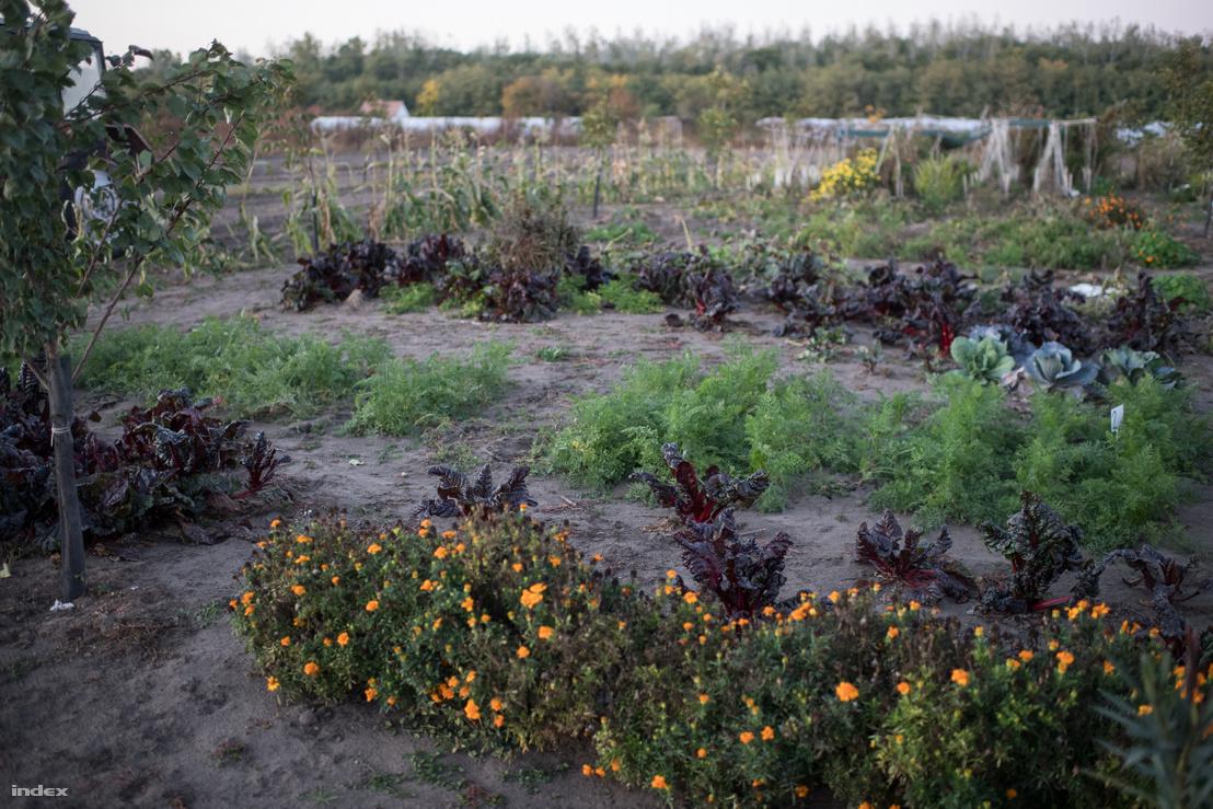 A jó növénypárosítással kevesebb a kártvevő